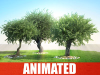 Realistic Animated Tree (olea) COLLECTION PACK (Garden Forest Landscape Plant)