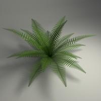maya fern blender