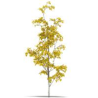 3d birch model
