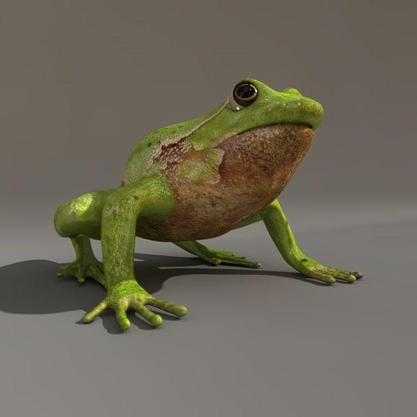 Frog color03.jpg