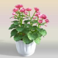 3d begonia flowerpot model