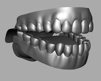 3d male denture