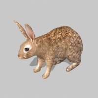 3d rabbit uv