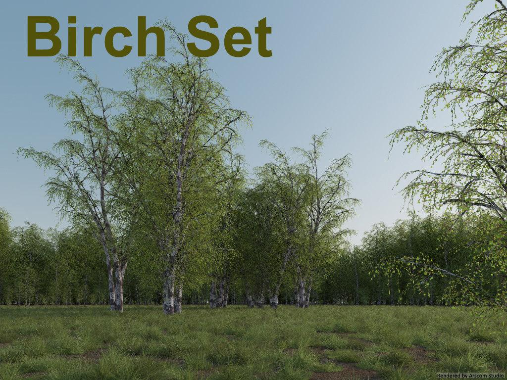 Birch1.jpg