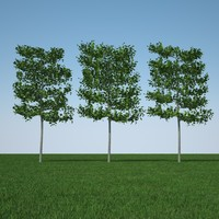 3d model common lime tree pack