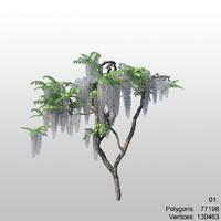 wisteria 01