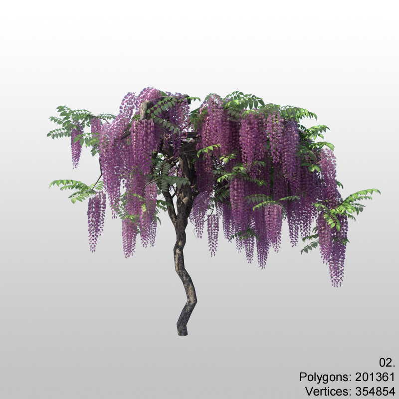 wisteria02_1.jpg