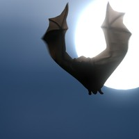 3ds max flying bat