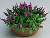 veronica flowers 3d model