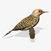 3d model woodpecker birds ab