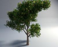 realistic tree 3d model