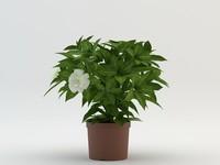 maya flower