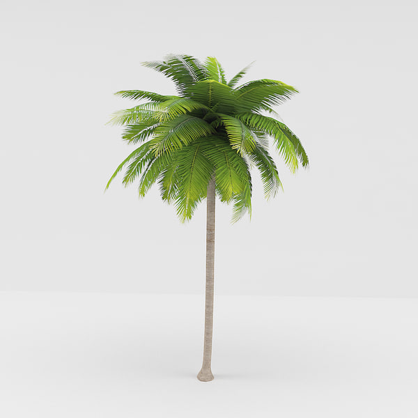 3d max palm beaches - Palm... by MasterPixel