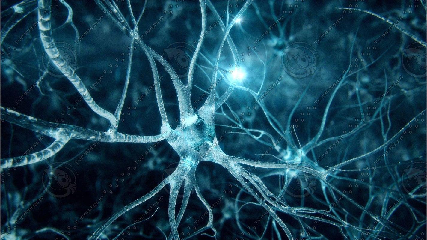 neurons-1.JPG