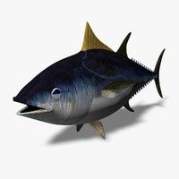 blue tuna 3d model