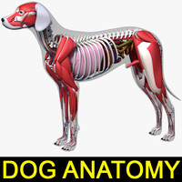 3d model dog anatomy dalmatian