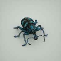 3d weevil eupholus quinitaenia -