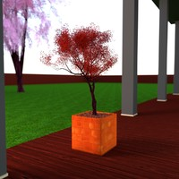 efficient young japanese maple 3d obj