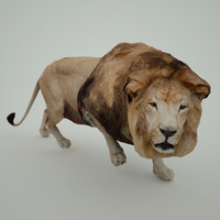 3d panthera leo lion model