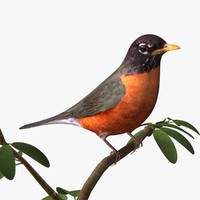 3d 3ds american robin birds ab