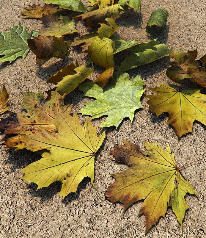 leafs_pack_render.jpg