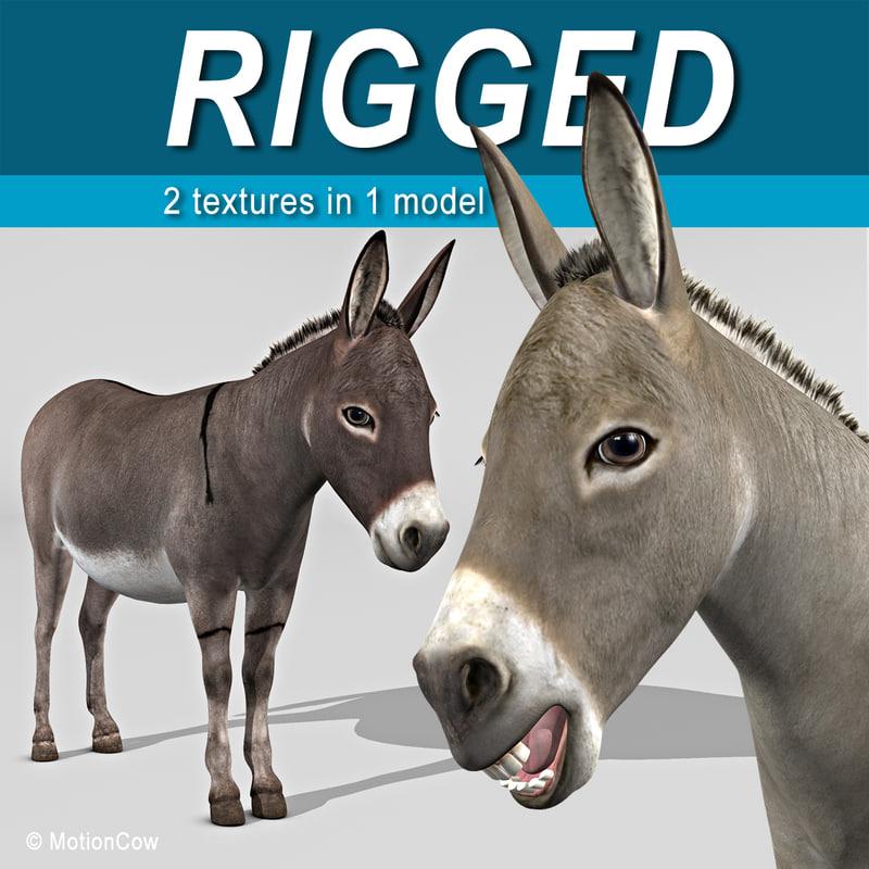Donkey_A.jpg