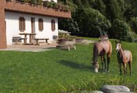 3d horses