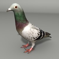 3d max pigeon modeled