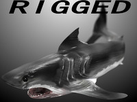 shark rigged 3d max