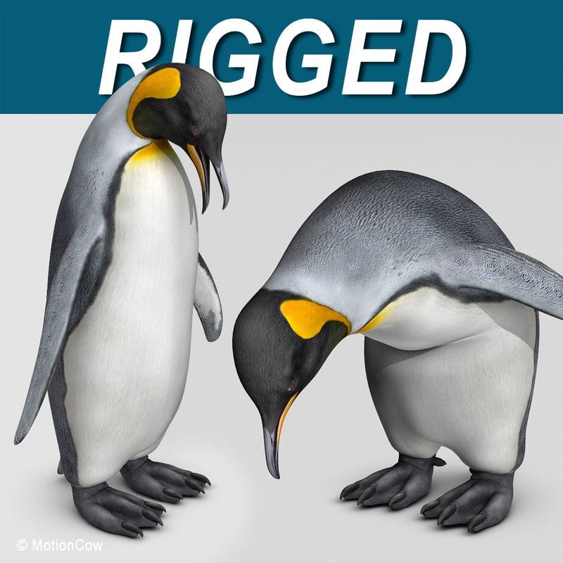 King_Penguin_AAA.jpg