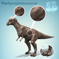 dinosaurs Pachycephalosaurus