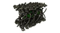 lichen 3D models
