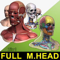 Full Male Head Anatomy