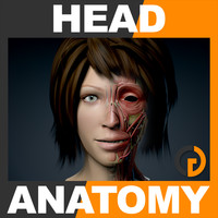 Human Female Head Anatomy