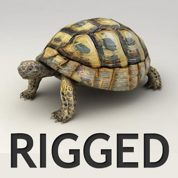 turtle_v0.jpg