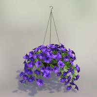 petunia flower max