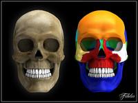 human skull 3d x