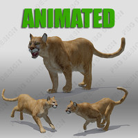 mountain lion animations 3d model