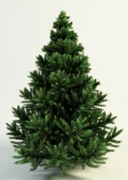 max picea spruce