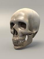 3d skull skeleton model