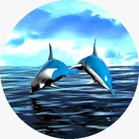 3d dolphins animation