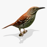 maya brown thrasher ab