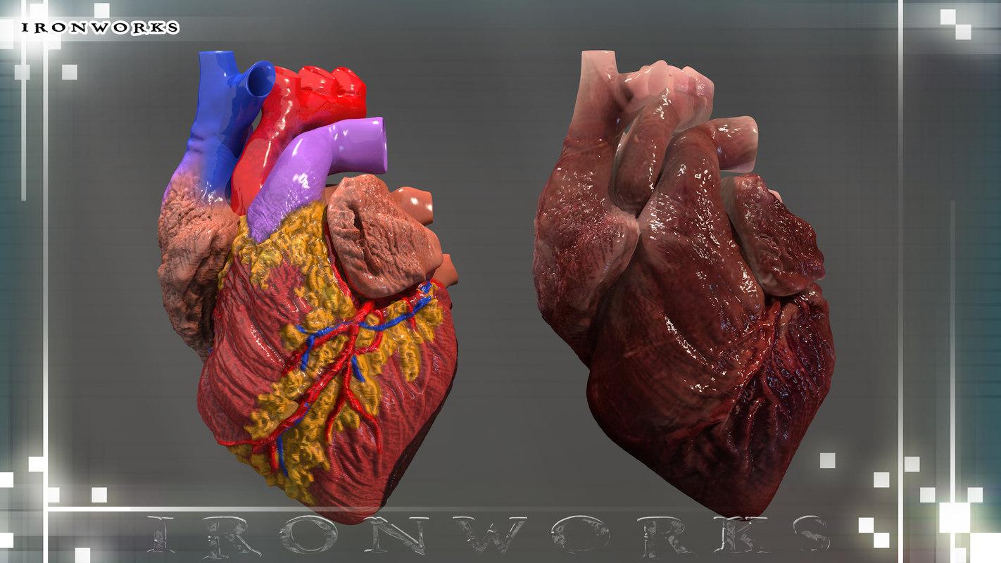 heart imaging 12.jpg