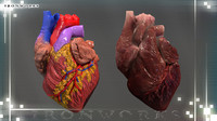heart diagram 3d model