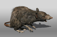 3d sewer rat model