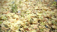obj fallen leaves photorealistic