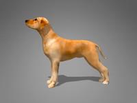 3d dog canine model