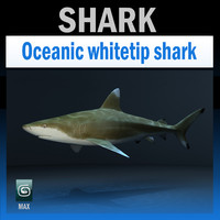 maya oceanic shark