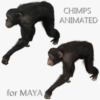 maya chimps fur animation