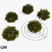 Set of 5 bushes